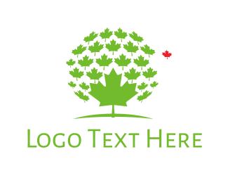 Maple - Maple Leaves logo design