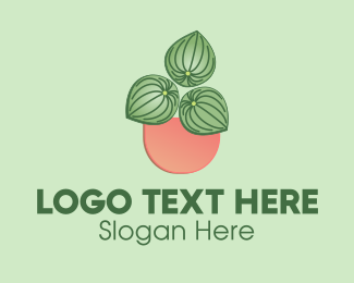 Plant Mom - Watermelon Peperomia Plant logo design