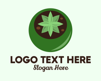 Soil - Potted Succulent Cactus  logo design
