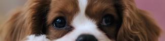 Pet Food Delivery LinkedIn banner