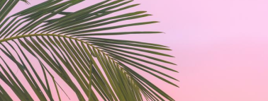 Pink Tropical Palms Facebook cover